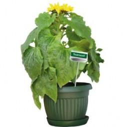Piquet de plante